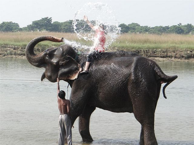 Bathing with elephants in Sauraha, Chitwan